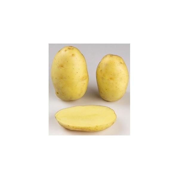 Pomme de terre fin de si cle up to date la bonne graine - Variete de pomme de terre ancienne ...