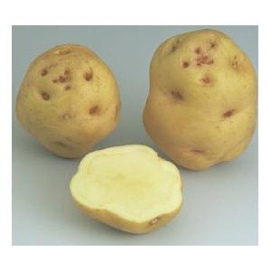 Pomme de terre institut de beauvais la bonne graine - Tableau pomme de terre varietes ...
