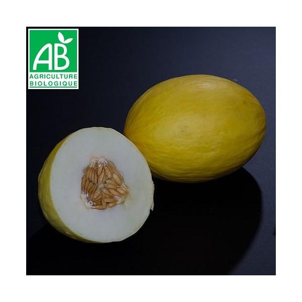 Melon jaune canari bio la bonne graine - Quand recolter les melons ...