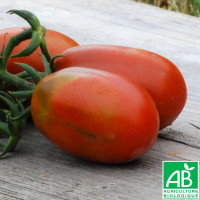 Tomate Prune Noire Bio