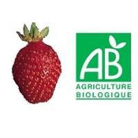 Plant de fraisier Bio Belrubi (godet)