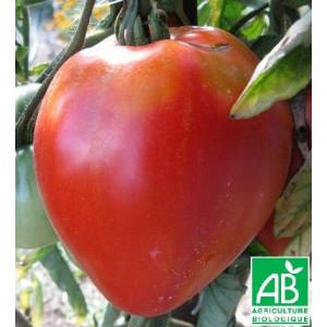 tomate coeur de boeuf bio la bonne graine. Black Bedroom Furniture Sets. Home Design Ideas