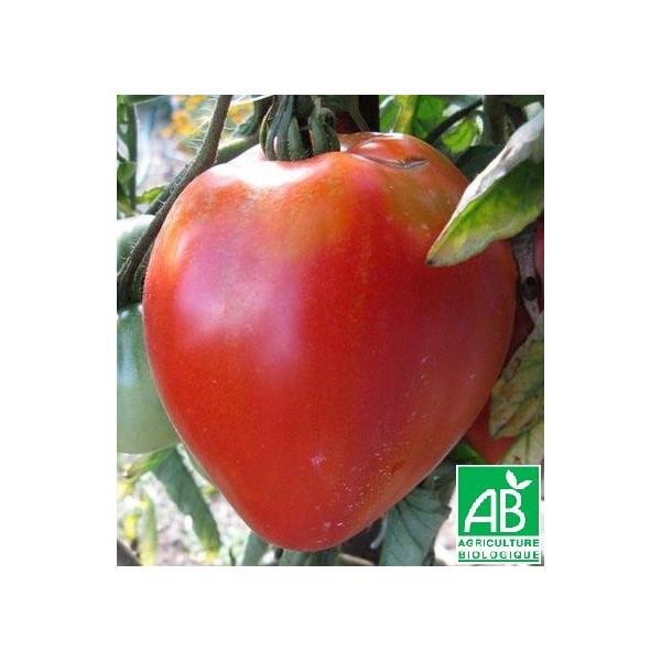 Tomate coeur de boeuf bio la bonne graine - Planter des tomates coeur de boeuf ...