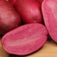 Pomme de terre Red Emmalie