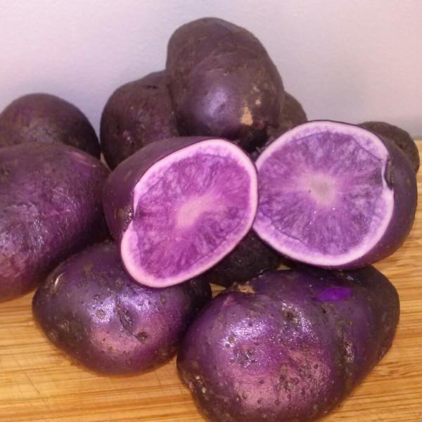 Pomme de terre blue salad la bonne graine - Variete pomme de terre rouge ...