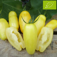 Tomate Banana Leg Bio