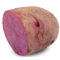 Pomme de terre Magenta Love