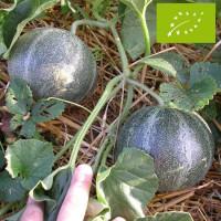 Melon Petit Gris de Rennes Bio
