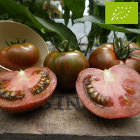 Tomate Black Zebra Bio