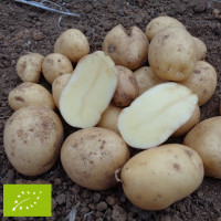Pomme de terre Artémis BIO