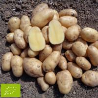Pomme de terre Laurette BIO