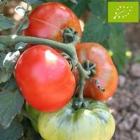 Tomate Joie de la Table Bio