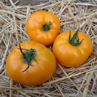 Tomate Orange Wellington F1