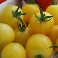 Tomate White Cherry