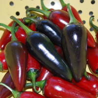 Piment Hungarian Black