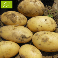 Pomme de terre Gourmandine BIO