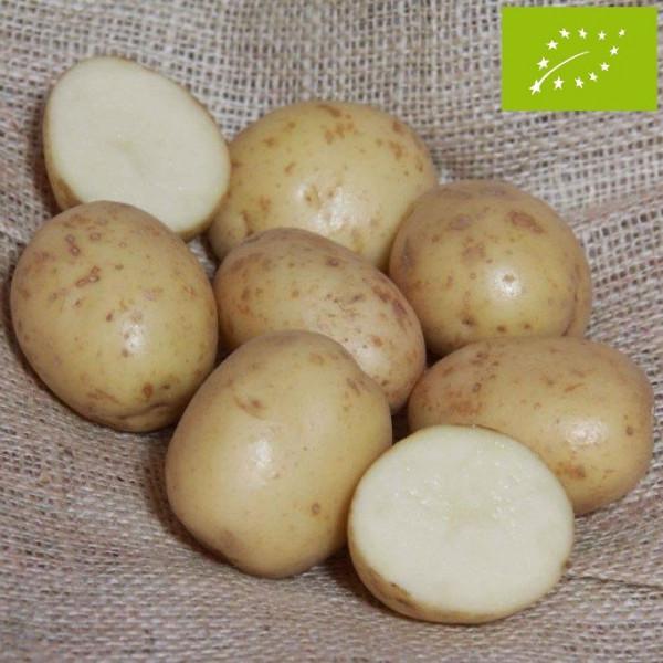 Pomme de terre bambino bio la bonne graine - Variete de pomme de terre ancienne ...