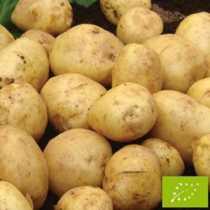 Pomme de terre british queen bio la bonne graine - Variete de pomme de terre ancienne ...