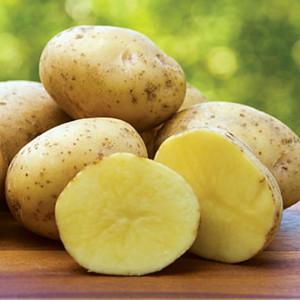 Pomme de terre yukon gold la bonne graine - Variete de pomme de terre ancienne ...